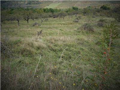 Teren Dealul Dumitrei,57 de arii,Extravilan